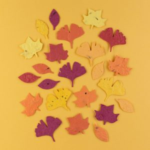 Plantable Fall Leaf Paper by Recycled Ideas
